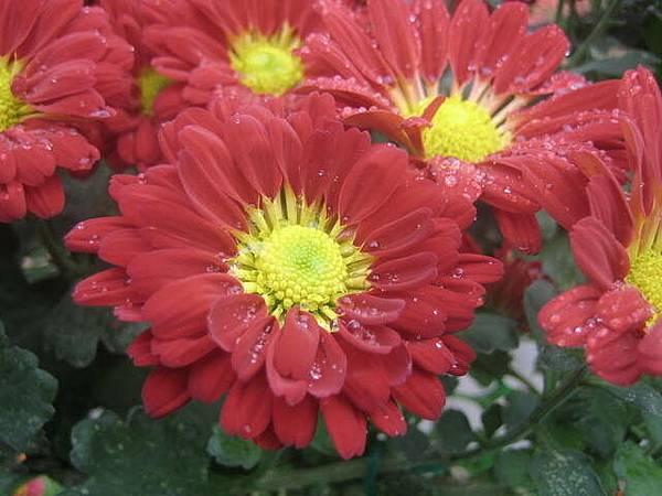 拍得很不錯的花
