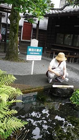 柿田川湧泉