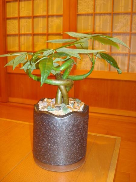 戰利品--可愛小盆栽