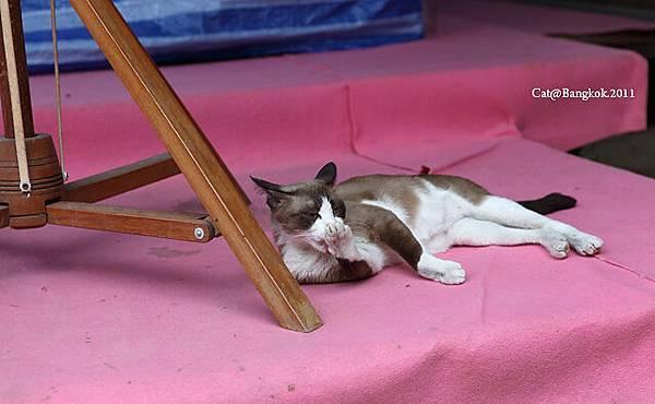 Cat@Bangkok_3.jpg