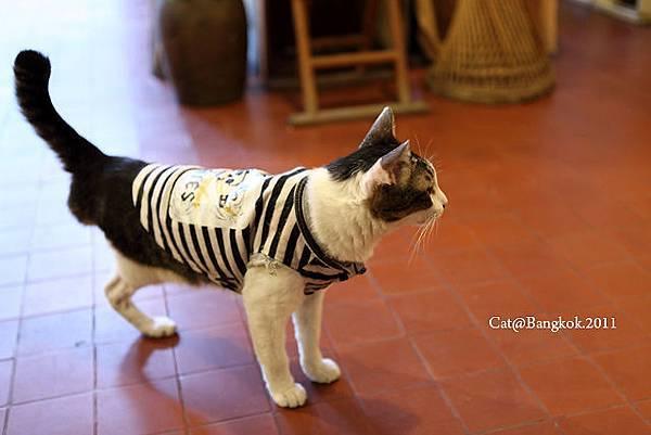 Cat@Bangkok_24.jpg
