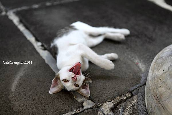 Cat@Bangkok_37.jpg