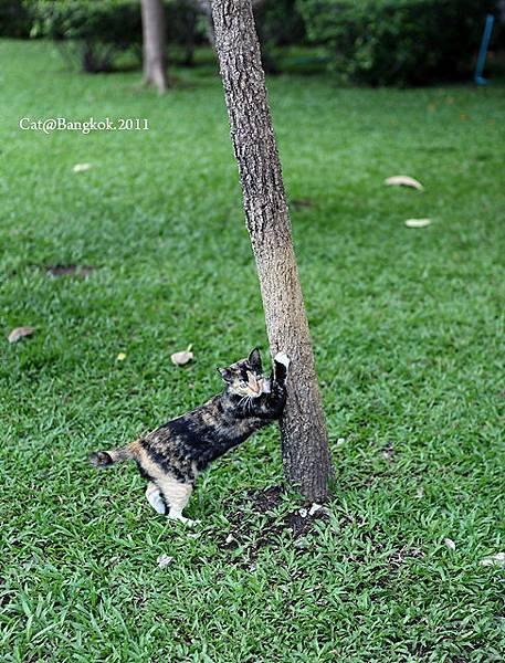 Cat@Bangkok_42.jpg