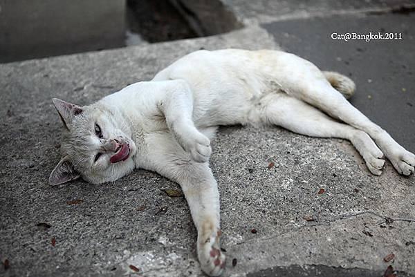 Cat@Bangkok_45.jpg