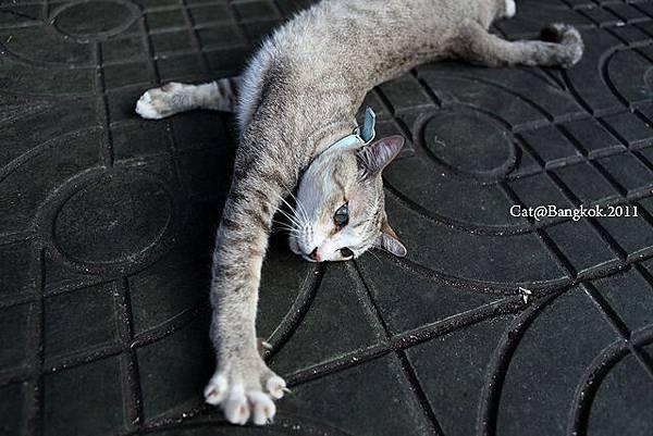 Cat@Bangkok_47.jpg
