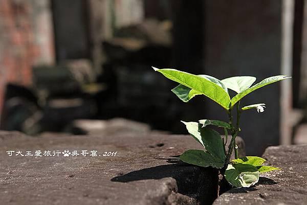 Prah Khan_25.jpg