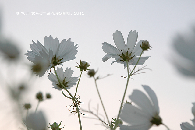 Ciaotou_39