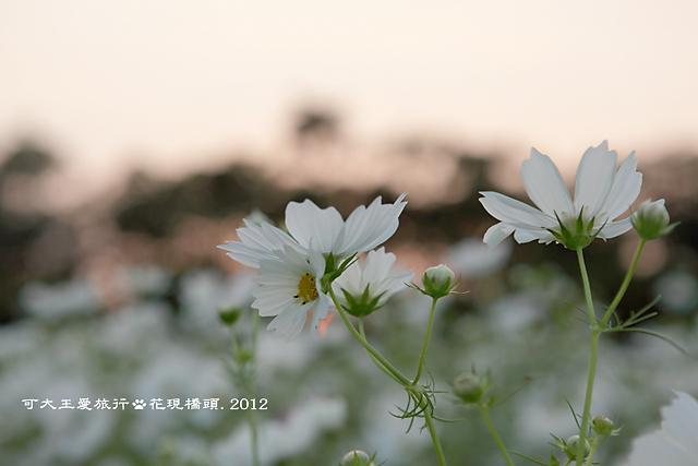 Ciaotou_38