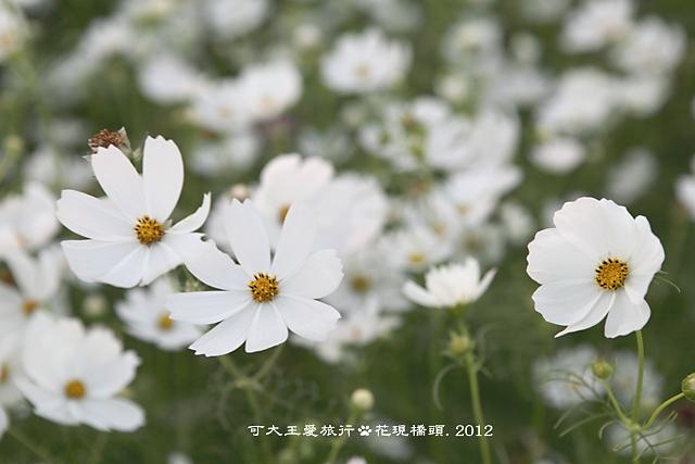 Ciaotou_41