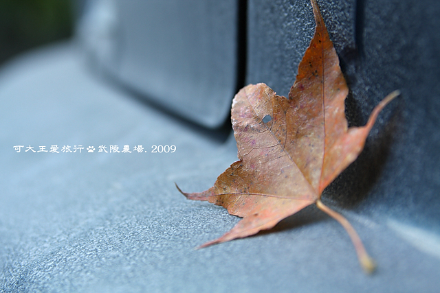Wuling_29