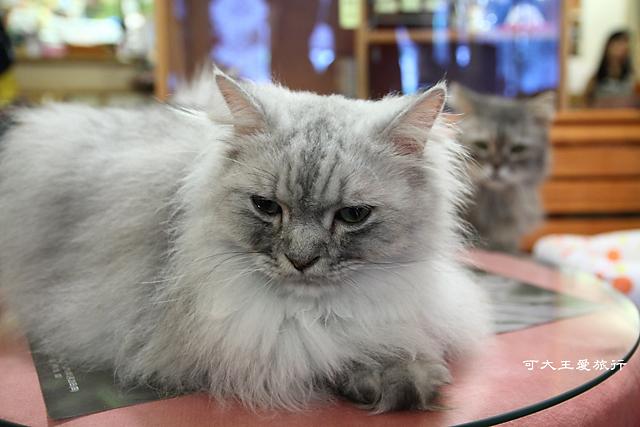 Cafe Dog&Cats_7