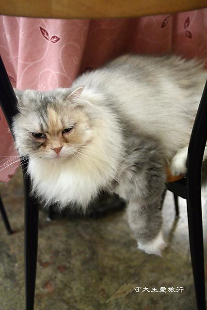 Cafe Dog&Cats_17