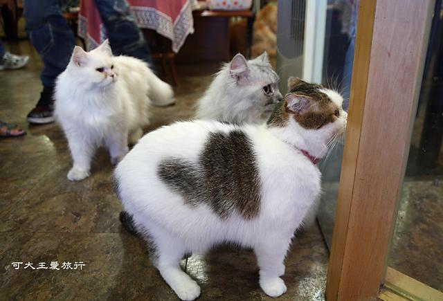 Cafe Dog&Cats_21