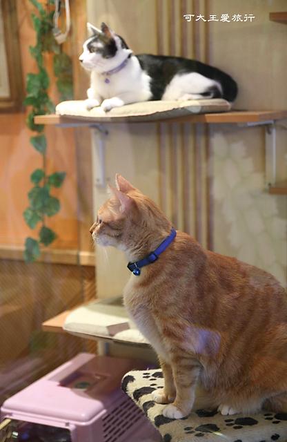 Cafe Dog&Cats_23