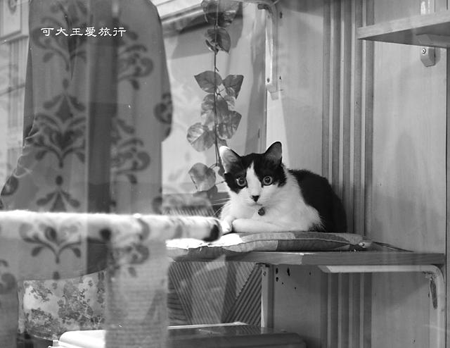 Cafe Dog&Cats_26