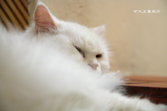 Cafe Dog&Cats_32