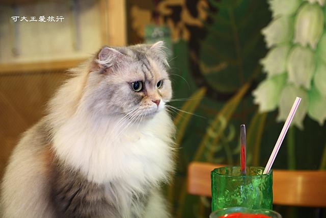 Cafe Dog&Cats_36