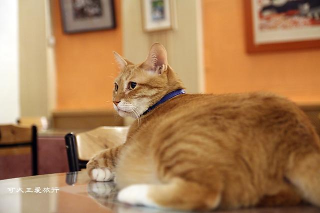 Cafe Dog&Cats_37