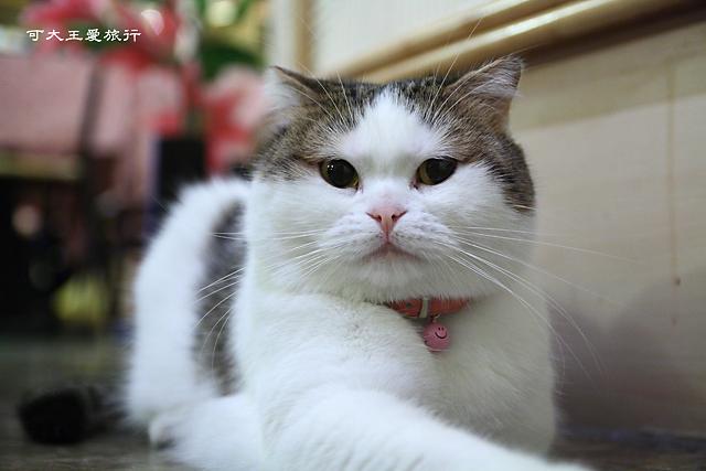 Cafe Dog&Cats_39