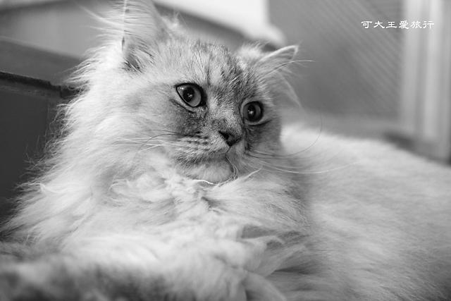 Cafe Dog&Cats_38