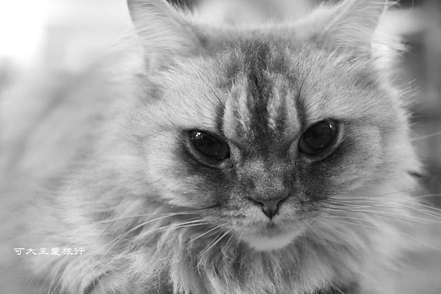 Cafe Dog&Cats_42