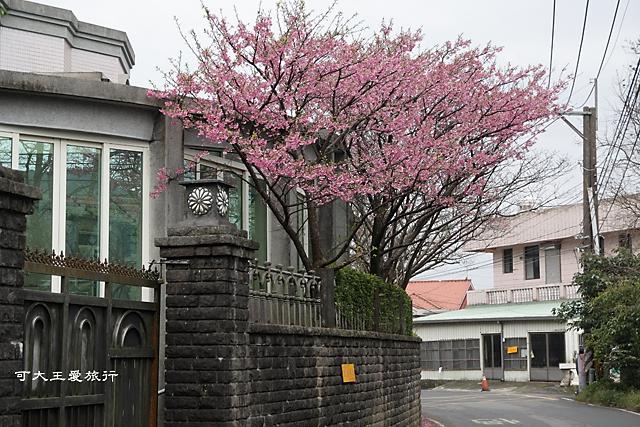 Formosa Cherry_10