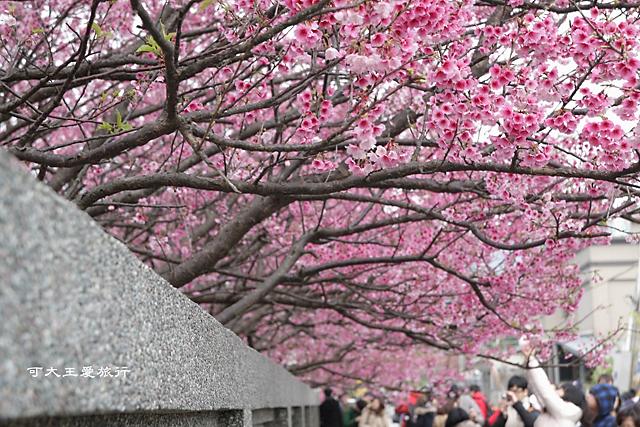 Formosa Cherry_71