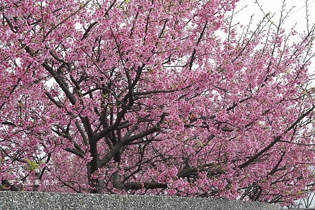 Formosa Cherry_74