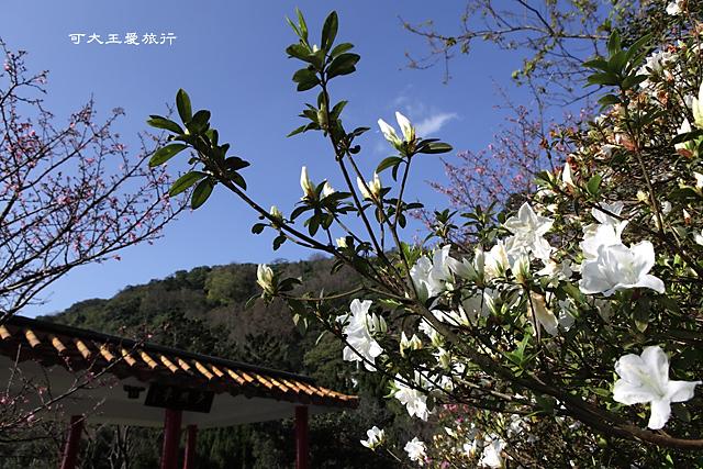 Yangmingshan_11