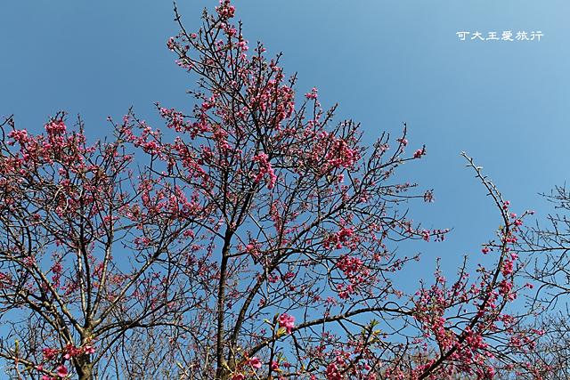 Yangmingshan_15