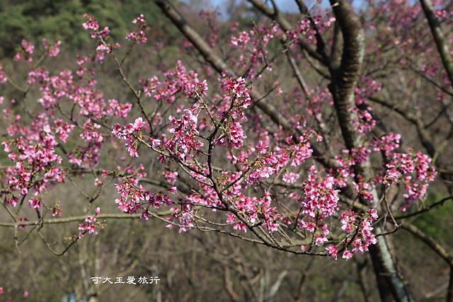 Yangmingshan_27