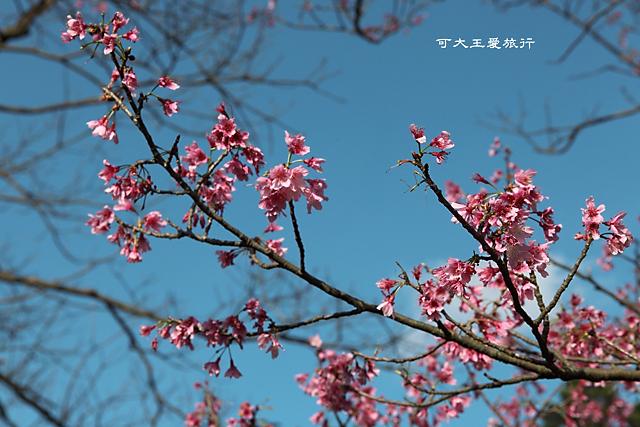Yangmingshan_28
