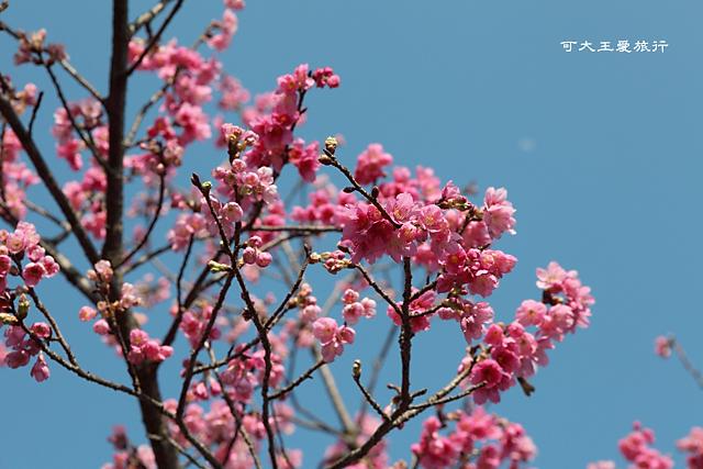 Yangmingshan_31