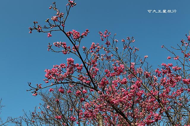 Yangmingshan_34