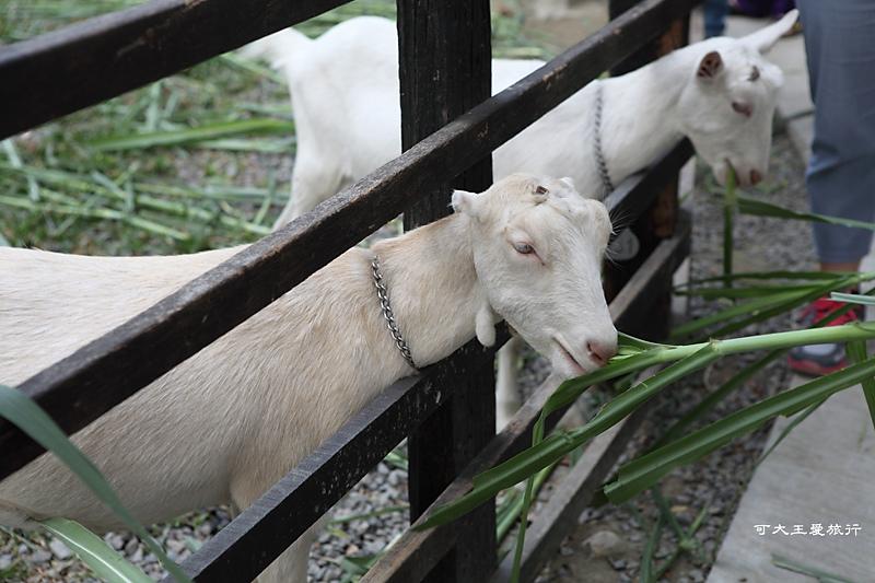 goatsfarm_17.jpg