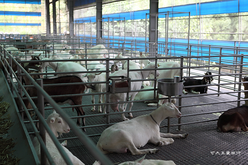 goatsfarm_21.jpg