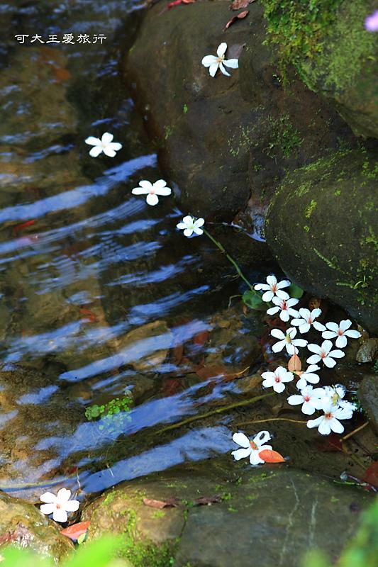 tung blossom_18.jpg