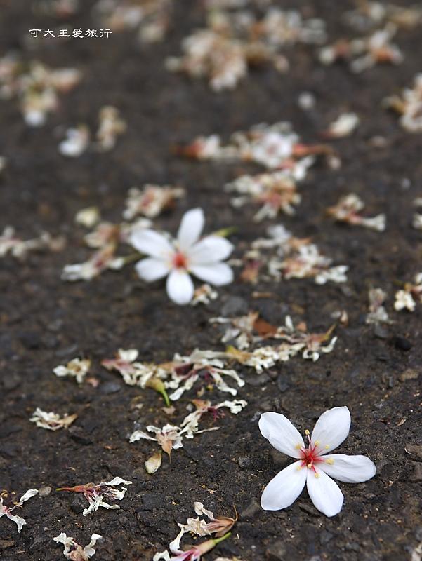 tung blossom_2.jpg