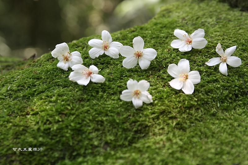 tung blossom_15.jpg