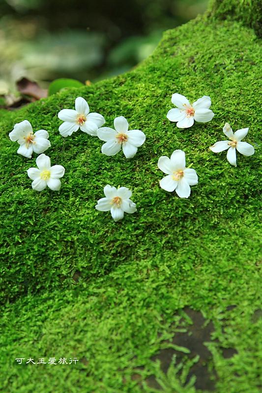 tung blossom_17.jpg