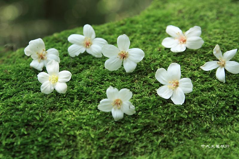 tung blossom_16.jpg