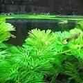 水草和小魚