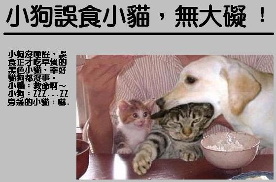 小狗誤食小貓.jpg
