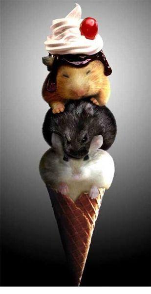 可愛的3色雪糕.jpg