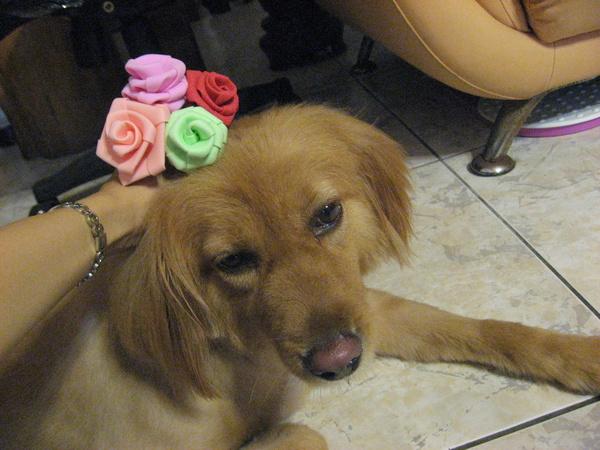20080803做了幾朵泡棉玫瑰花