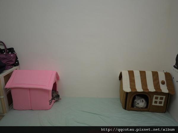 1自從叩逃搶了QQ的窩床後,現在我的雙人床就變成了這個樣子@@