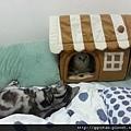 1很多人在FB看到這張照片都說QQ是女王,所以睡房子裡,叩逃只好睡在外面乾瞪眼。