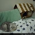 3話說Q妃已經很久沒和我睡了,只因為他搶不過家裡的胖妃!於是~今天下午就發現一隻貓整天佔著這位子不走!