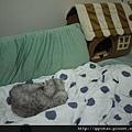 4(欽點)今天晚上的枕邊貓就是你了!XDD