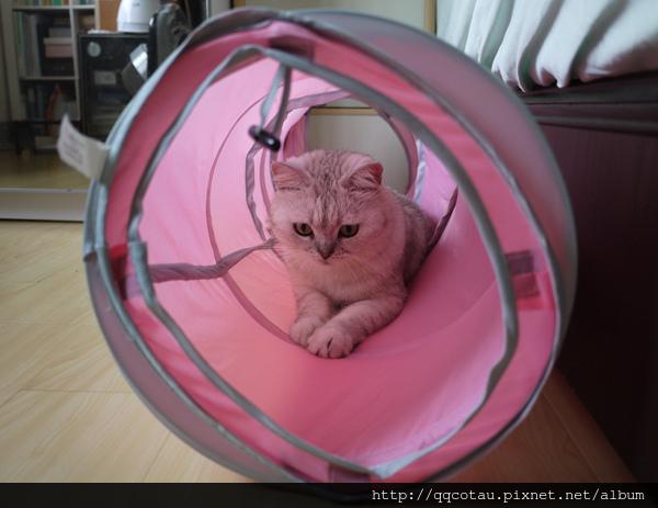 QQ最喜歡躲在貓隧道裡面玩
